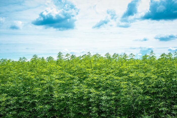 CBD Industry Can Help the Environment